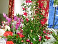 Flowers at Wetheral Show - Sep 2013